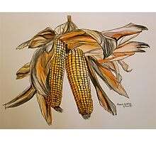 Drying sweetcorn, Tuscany. Pen and wash. Framed. 42x32cm Photographic Print