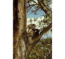 Mother and Baby koala Photographic Print