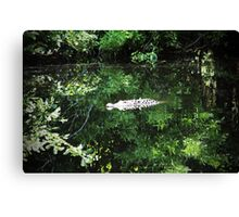 Alligator In The Middle Canvas Print