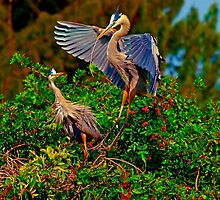 Blue Herons by Michael Wolf