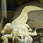 Gator White by Donna Adamski