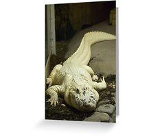 Gator White Greeting Card