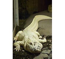 Gator White Photographic Print