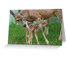 Mule Deer Mother & Fawn Greeting Card