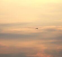 Limitless Sky by Sunil Bhardwaj