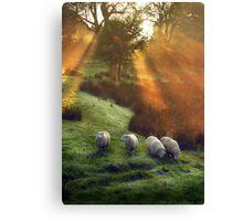 Holy Sheep!  Canvas Print