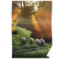 Holy Sheep!  Poster