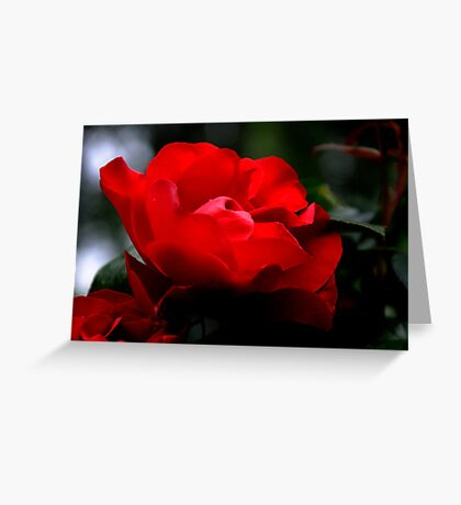Glory of a red rose Greeting Card