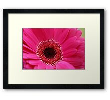 Pretty pink daisy Framed Print