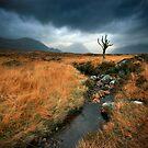 Scotland : Rannoch Moor by Angie Latham
