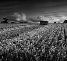 Harvest Moon Rising by Andy Freer