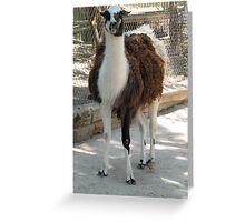 Momma Llama  Greeting Card