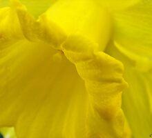 Yellow by carol lynch