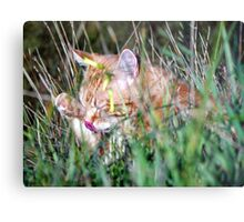Stakeouts are so boring........ Metal Print