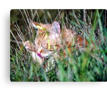 Stakeouts are so boring........ Canvas Print