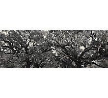 Nature's Impressionism Photographic Print