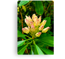 Rhododendron #1 Canvas Print
