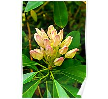 Rhododendron #1 Poster