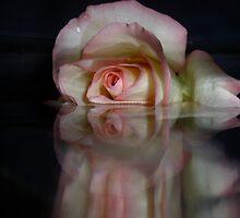 Buoyant Petals by ccmerino