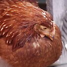 Chickadee by aldemore