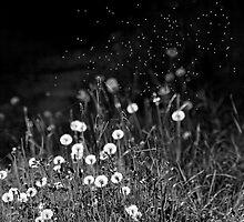 Dandelions in black&white by Mariann Rea