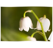 Lily of the valley closeup Poster