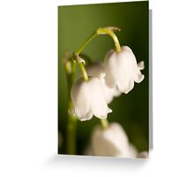 Lily of the valley closeup Greeting Card