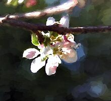 Apple Blossom by RoufXis