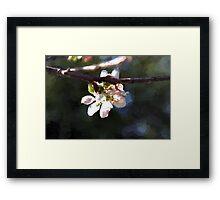 Apple Blossom Framed Print