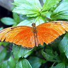 Brilliant Orange Butterfly by Tom Clancy