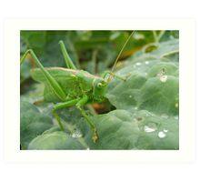 Great Green Bush Cricket Art Print