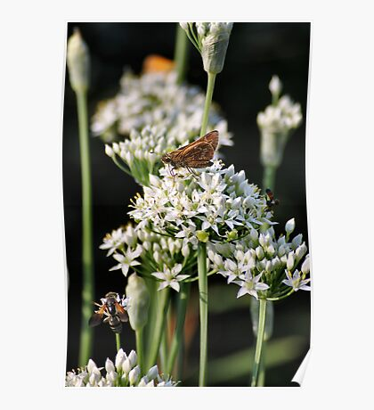 'More Chives, More Buggies...' Poster