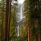 Yosemite Falls Behind the Red Pines by Peggy Berger
