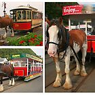 Horse Tram Trio by RedHillDigital