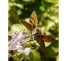 drinking nectar Photographic Print