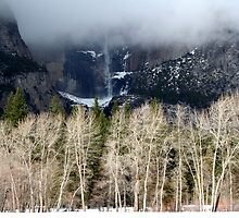 Cottonwood Trees and Yosemite Falls  by Peggy Berger