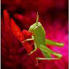Infant Pest by Chet  King