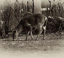 In The Wilderness by Jarede Schmetterer