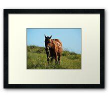 Yech- diet grass!! Framed Print