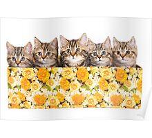 Five striped kitten in a box Poster