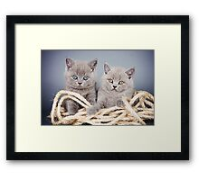 Two gray fluffy kitten Framed Print