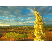 Mesilla Valley Blossoms Photographic Print