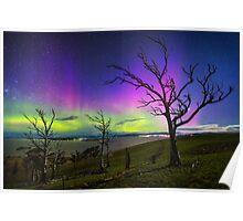 Aurora Treescape Poster