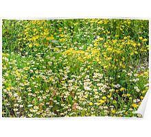Chamomile and Dandelion Poster