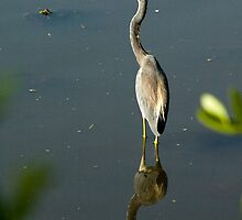 Heron Mirrored by Donna Adamski