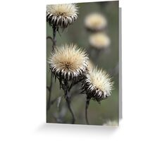 Trio ( from wild flowers collection)  Greeting Card