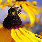 Bee Happy by colleen e scott