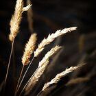 seed heads 3 by Bill vander Sluys
