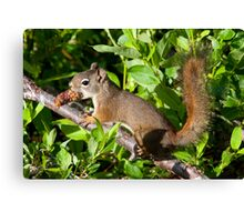 Forage for Breakfast! Canvas Print