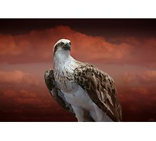 The Glory of an Eagle Photographic Print